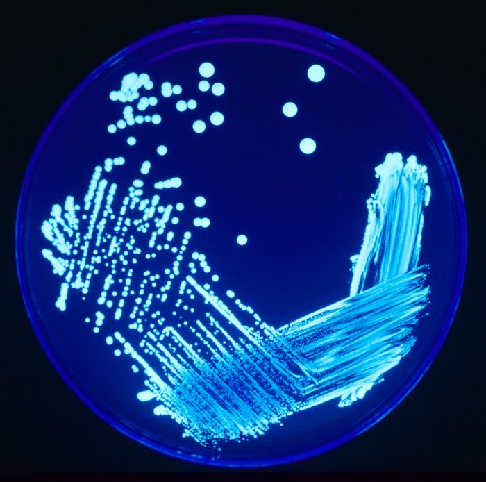 Manuale Legionella